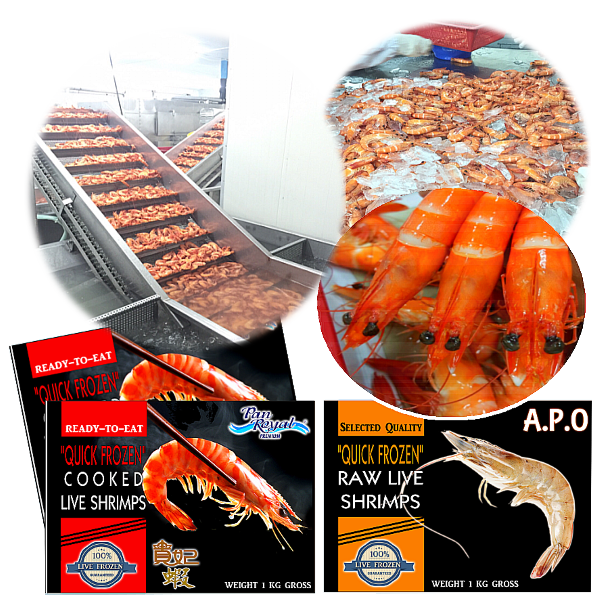 Pan Ocean Singapore Pte Ltd – Integrated Seafood Processing Company